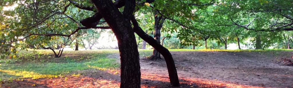 Grounding and Meditation