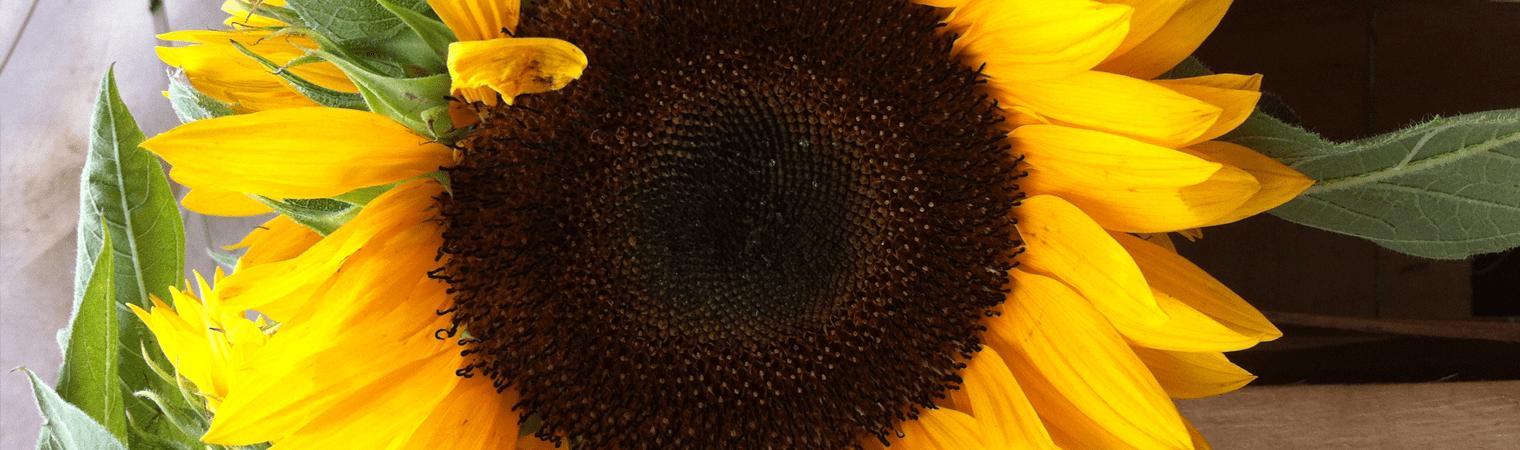 Sunflower Spiritual Practice